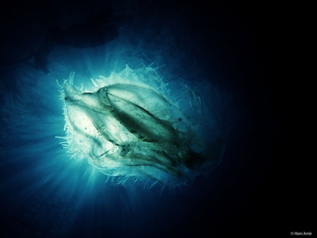 photo credit: Hani Amir Nebula via photopin (license)
