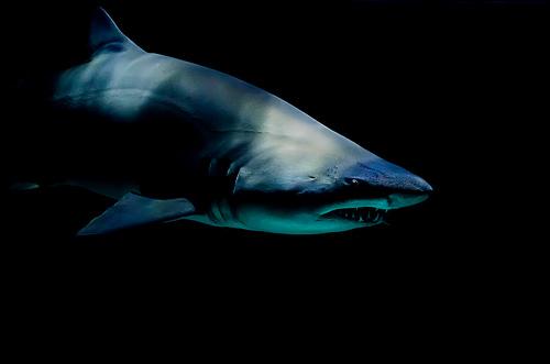 photo credit: Laura Jane College Shark via photopin (license)